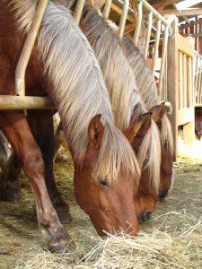 Nos chevaux